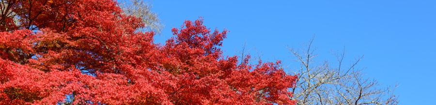 秋 [スライダー ]